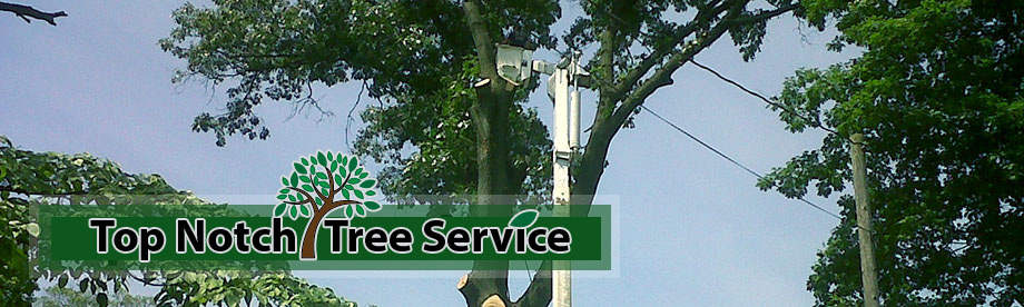 Top Notch Tree Service South Jersey